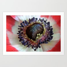 Anemone in Pink Art Print