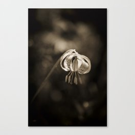 Grace a beautiful wildflower Turks Cap lily Canvas Print