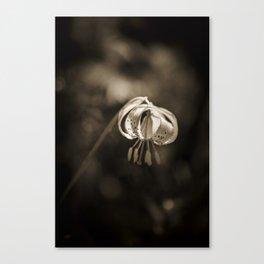 Grace a beautiful wildflower Turks Cap lily Canvas Print