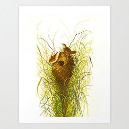Nuttall's lesser-marsh Wren Art Print