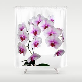 White and red Doritaenopsis orchid flowers Shower Curtain