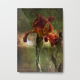 My Iris Metal Print