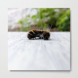 Wannabe Tiger (Fox Moth Caterpillar) Metal Print