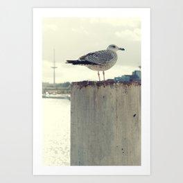 Möwe Kiel Art Print