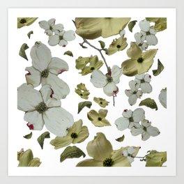 Dogwood Pedals on White Art Print