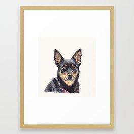 Kelpie Alert Framed Art Print