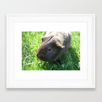 guinea pig Framed Art Prints featuring Guinea Pig by Rose&BumbleBee