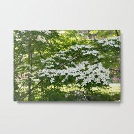 Longwood Gardens - Spring Series 245 Metal Print