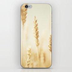 the cornfield ... iPhone & iPod Skin