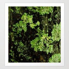 Textures - Moss Art Print