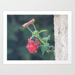 Red on the wall Art Print