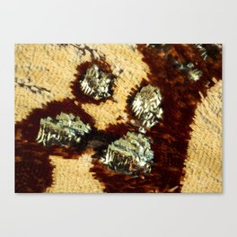BUTTERFLY MAGNIFIED - ANTEROS FOMOSUS Canvas Print
