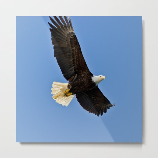 Freedom Eagle (color) Metal Print