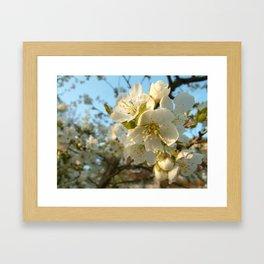 Cherry-tree Framed Art Print