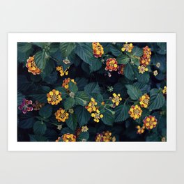 Beautiful flowers over my neighborhood Art Print