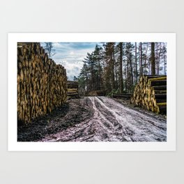Poltery Site (Wood Storage Area) After Storm Victoria Möhne Forest 5 Art Print
