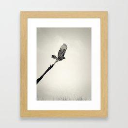 Red-Tail Hawk on Columbia River, Washington, Bird, Wildlife Framed Art Print