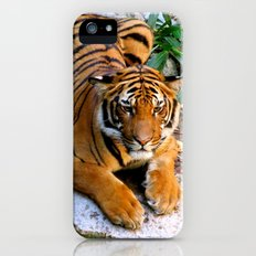 Pool Side Tiger Slim Case iPhone (5, 5s)