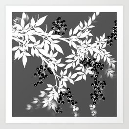 TREE BRANCHES GRAY WHITE WITH BLACK BERRIES Art Print