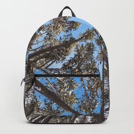 Yellowstone National Park - Lodgepole Forest Backpack