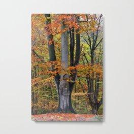 The Beauty of Fall Metal Print
