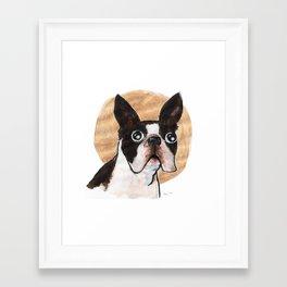 holy boston terrier Framed Art Print