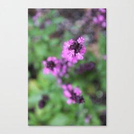 Pink Salvia Canvas Print