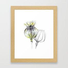 Poppy Pods Framed Art Print