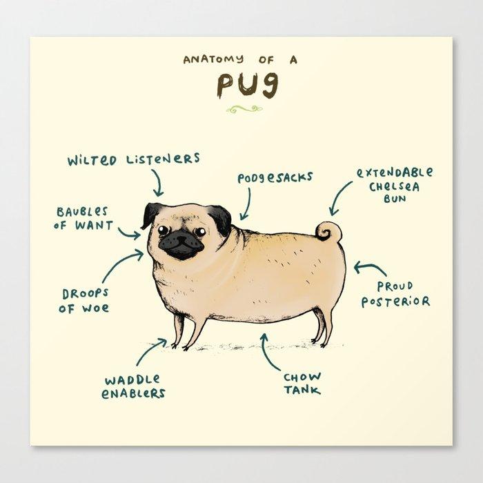 Anatomy of a Pug Canvas Print