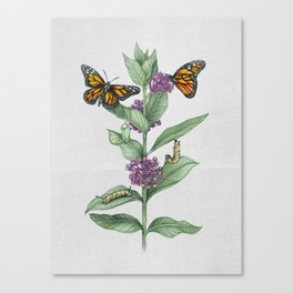 Monarch Butterfly Life Cycle Canvas Print