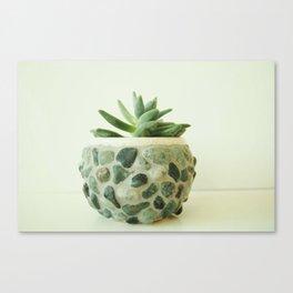 My Little Succulent Canvas Print