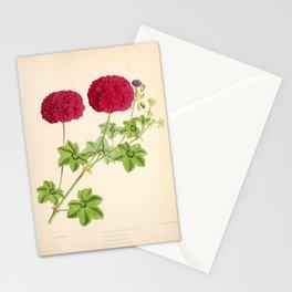 Ivy Leaved Pelargonium Stationery Cards