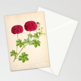 Ivy Leaved Pelargonium Stationery Cards