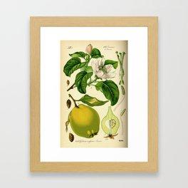 Botanical Print Framed Art Print