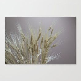 wheat ears in the farm Canvas Print