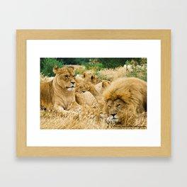 Lion family Framed Art Print