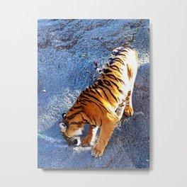 Tiger Investigations Metal Print