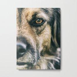 Dog personality Metal Print