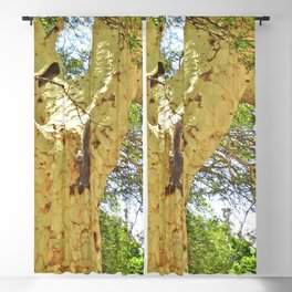 Squirrel Fever Blackout Curtain
