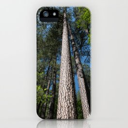 Tall Pine Trees in Mt. Lemmon iPhone Case