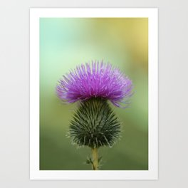 Bright Purple and Green Thistle Art Print