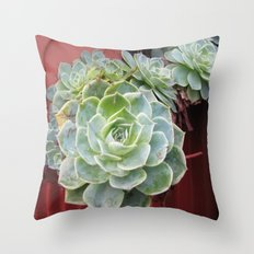 CANADA  - Succulents in Vancouver  Throw Pillow