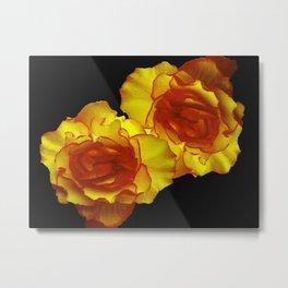 Sunshine Begonias Metal Print