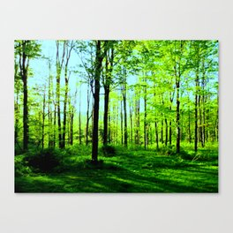 Sky Blue Morning Forest Canvas Print