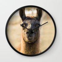 llama Wall Clocks featuring LLAMA by Julie Zhang