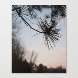 Pine Needles Canvas Print