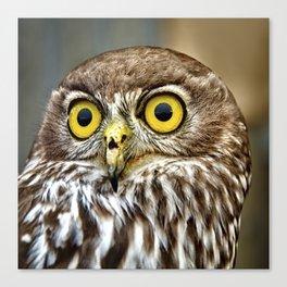 Barking Owl  Canvas Print