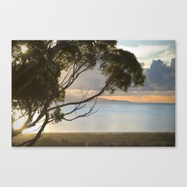 Hillside view of Santa Cruz Island Canvas Print