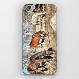 Apache Creek Ponies iPhone Skin