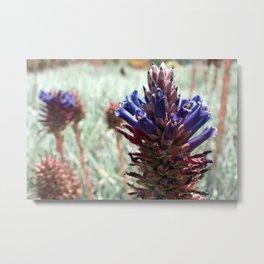 Purple  Flower  Spikes Metal Print
